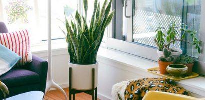 10 loài cây cảnh vô cùng phù hợp để trồng trong ngôi nhà của bạn